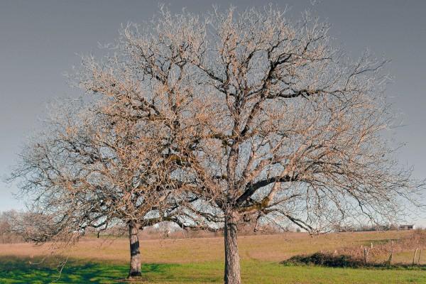 De Gaanderij | De keuze van Susan de Kruiff - Rob Thuis